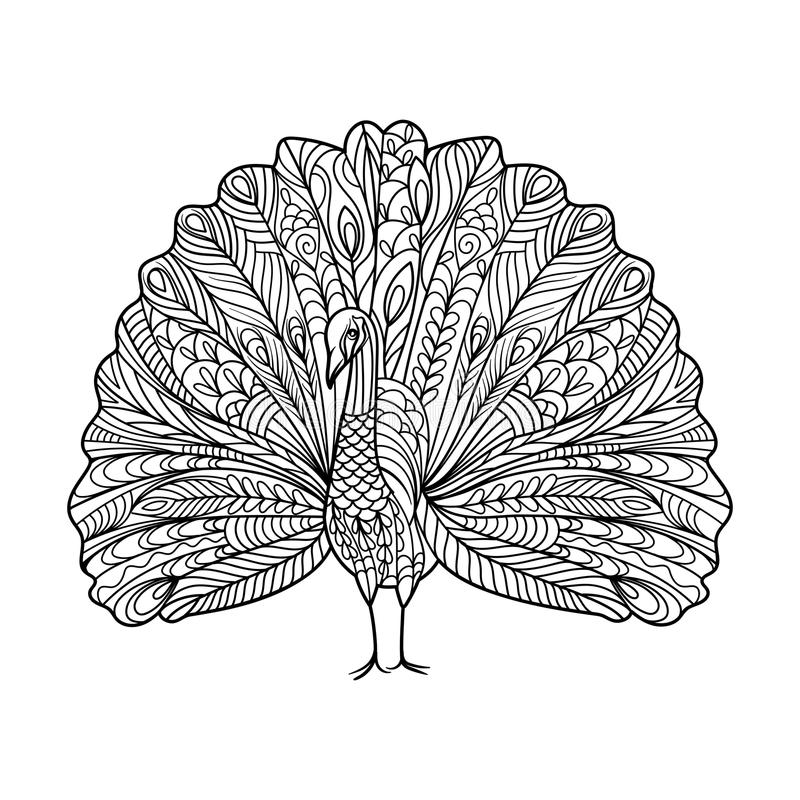 Peacock bird coloring book for adults vector royalty free illustration