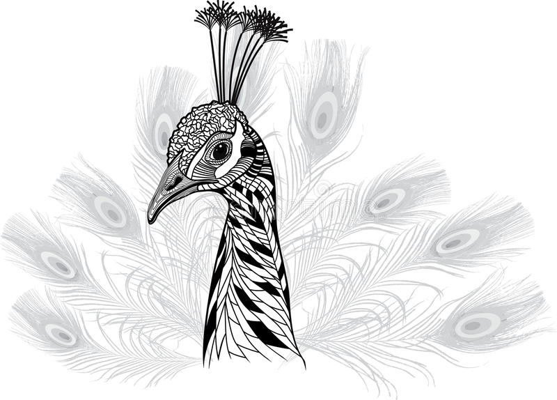 Peacock bird head as symbol for mascot or emblem design stock illustration