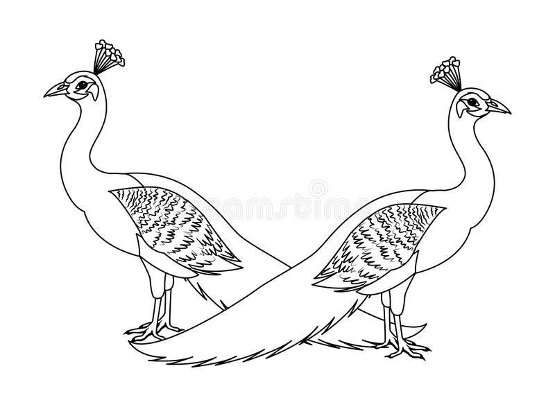 peacock bird icon cartoon isolated in black and white stock vector illustration of design bright 151140383 peacock bird icon cartoon isolated in