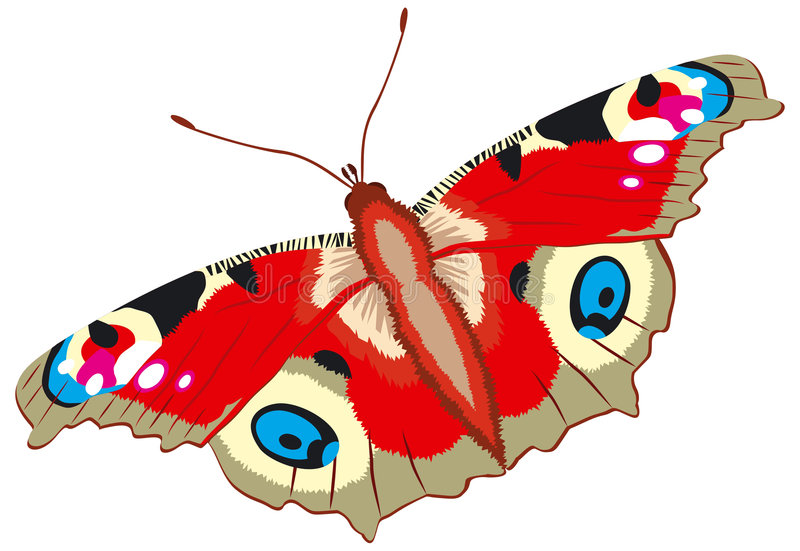 Peacock butterfly, Inachis io, vector stock illustration