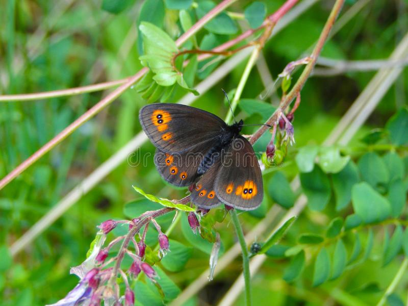 Butterfly in the wild forest stock photography