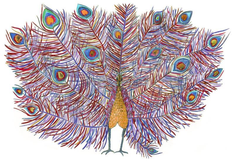 peacock cauda bonita Tirado com lápis coloridos ilustração stock