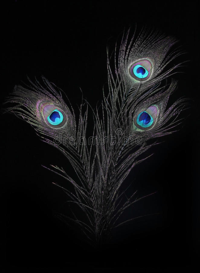 The peacock eyes 7 royalty free stock photos