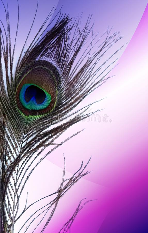 Peacock fathers with abstract multicolored shaded Background. Vector Illustration. Wallpaper, illustration. many uses for advertising, book page, paintings royalty free stock photography