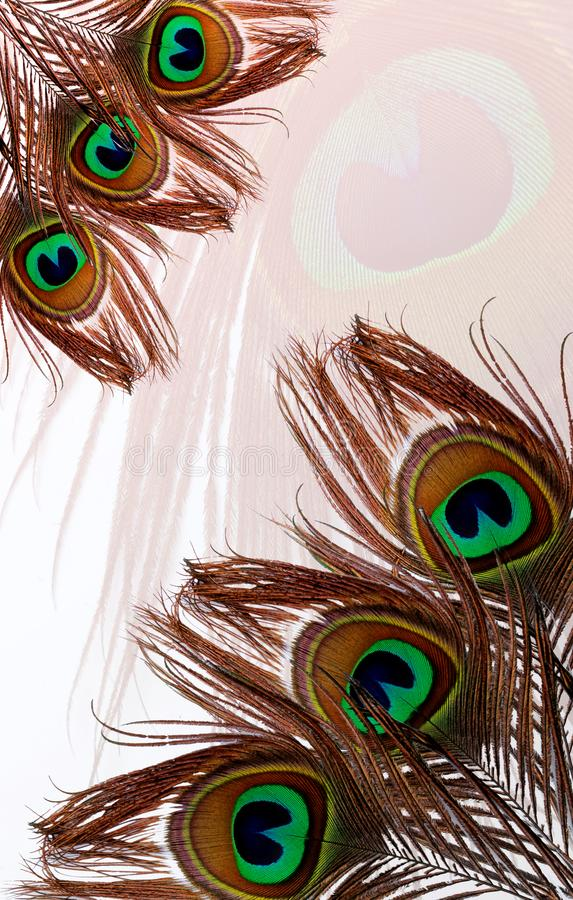Peacock fathers with abstract vector multicolored textured shaded Background. Vector Illustration. royalty free stock photos