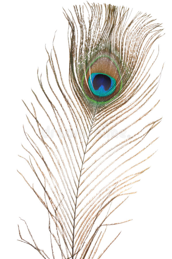 Download Peacock Feather Royalty Free Stock Images - Image: 13573099