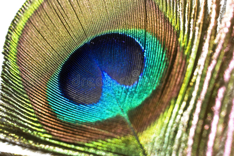 Download Peacock feather stock photo. Image of pattern, palette - 13850332
