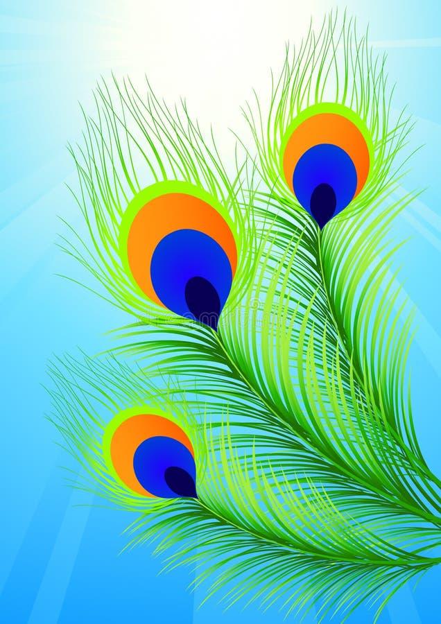 Peacock feather. Illustration, AI file included stock illustration