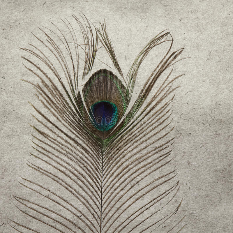 Download Peacock feather stock image. Image of edges, background - 17255205