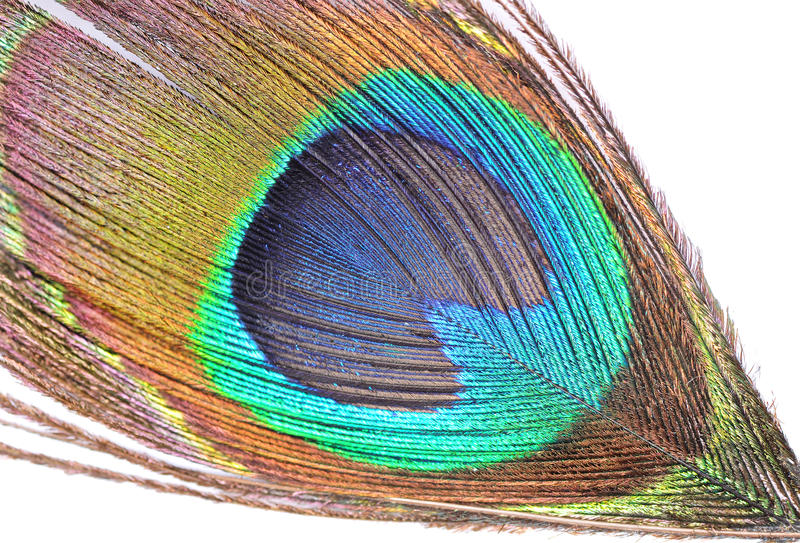 Download Peacock Feather Royalty Free Stock Photos - Image: 22530738