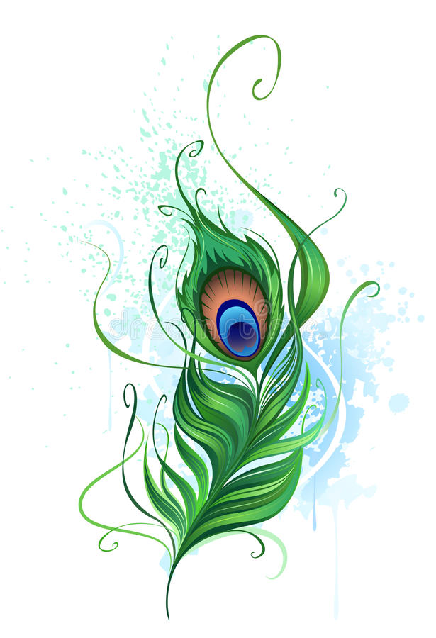Peacock feather vector illustration