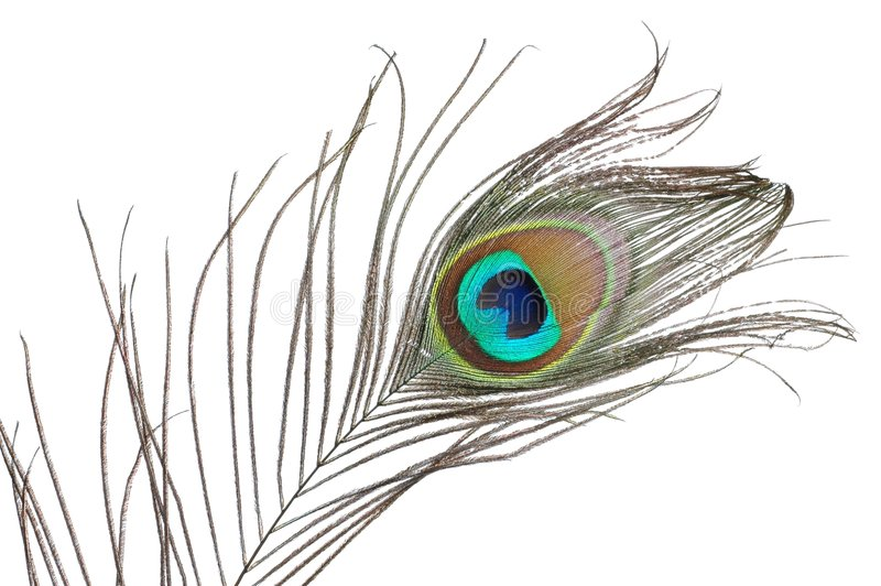 Download Peacock feather stock image. Image of vain, peacock, feather - 4451357