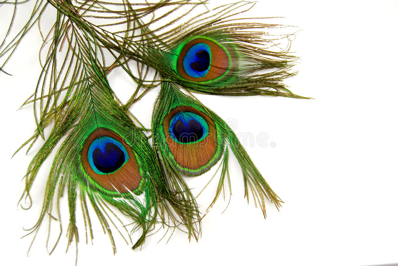 Download Peacock feather stock photo. Image of background, close - 4830706