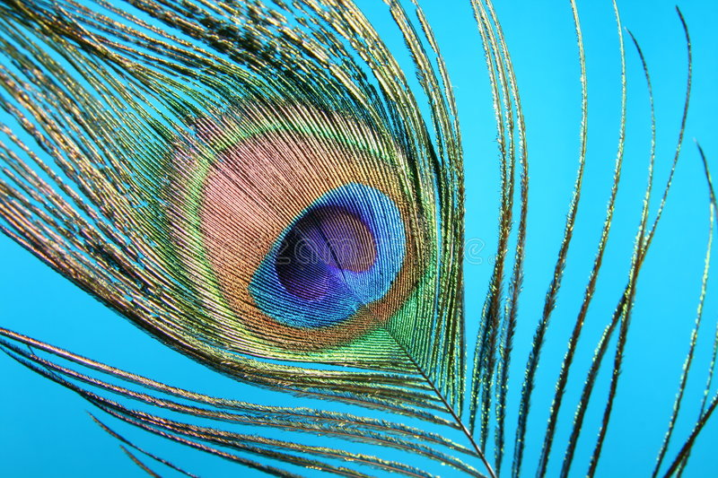 Download Peacock feather stock photo. Image of smooth, rainbow - 5845440