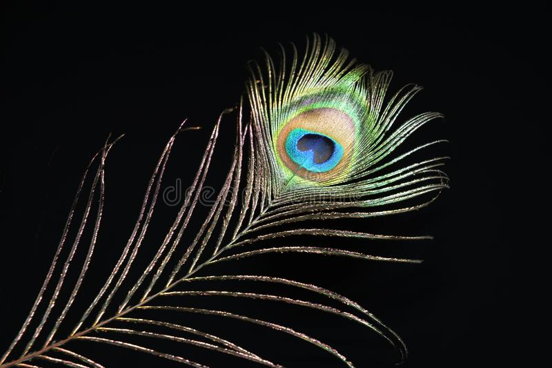 Peacock feather. On black background royalty free stock photography