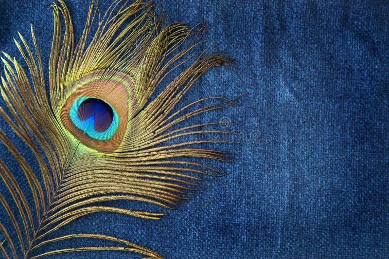 Peacock feather on blue stock photos