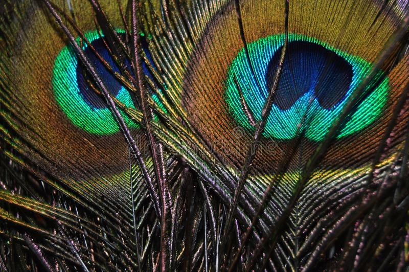 Peacock feather on a bright day royalty free stock photos