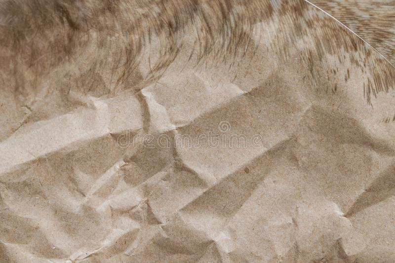 Peacock feather close-up on crumpled brown paper, abstract background,. Selective focus stock image