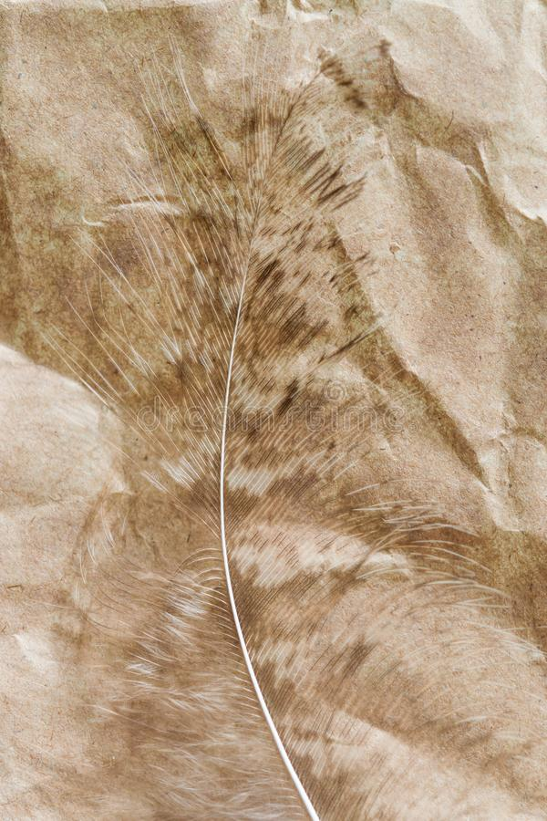 Peacock feather close-up on crumpled brown paper, abstract background,. Selective focus stock images