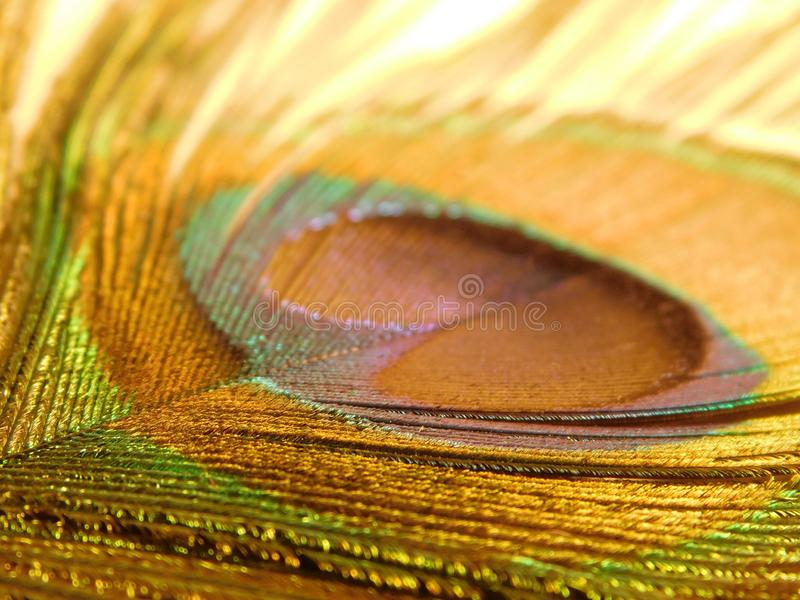 Peacock feather close up. Unusual background. Peacock feather shot at close range, tropical abstract background, bright colors and rainbow palette royalty free stock photos