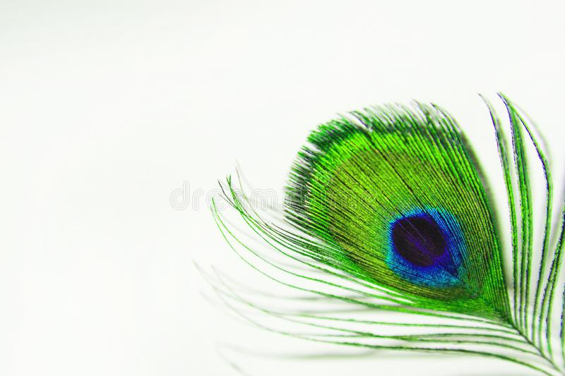Green feather peacock on a white sheet of paper. Peacock feather closeup on white background - Blur stock photos