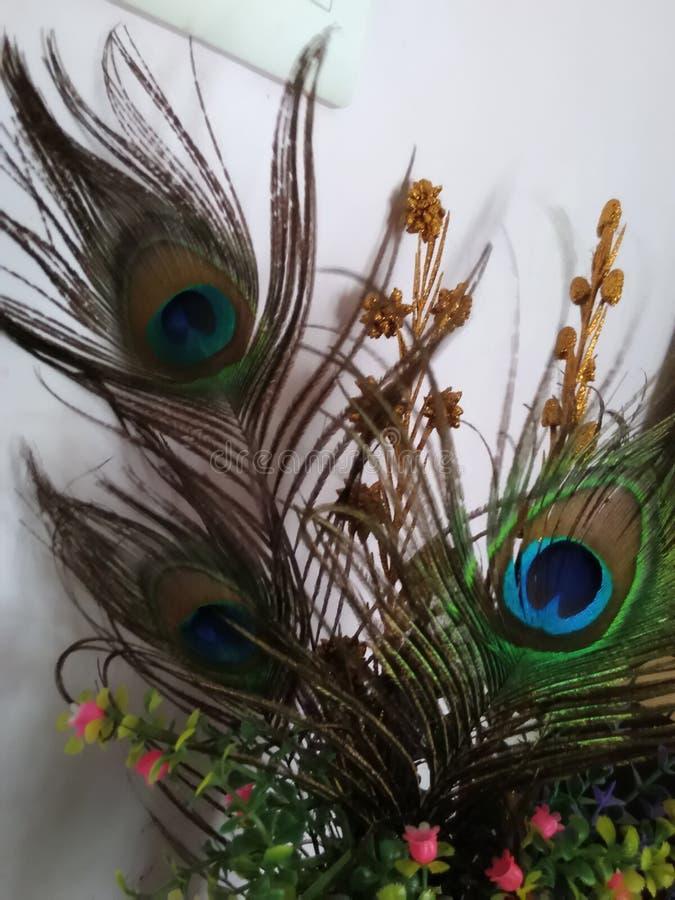 peacock feather decor lord krishna peacock decor 111367586