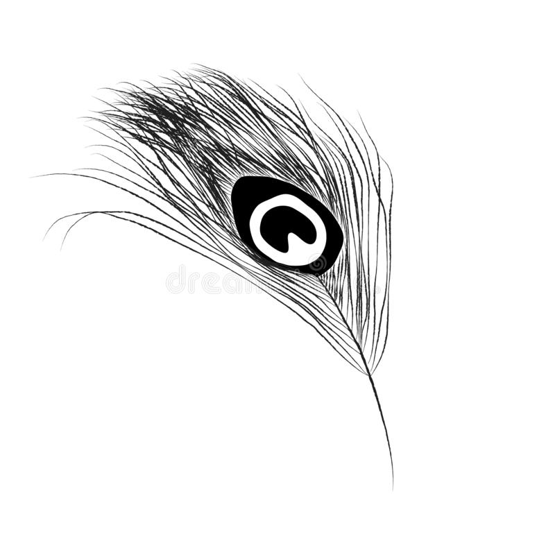 Peacock feather - hand drawing vector. royalty free illustration