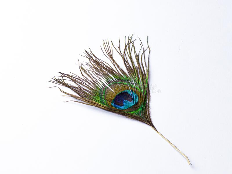 peacock feather isolated images white background 179230769