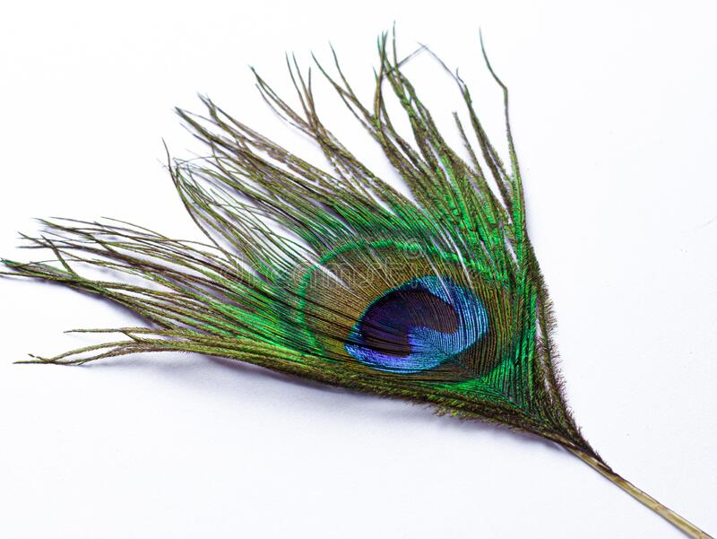 peacock feather isolated images white background peacock feather isolated images white background 183775776