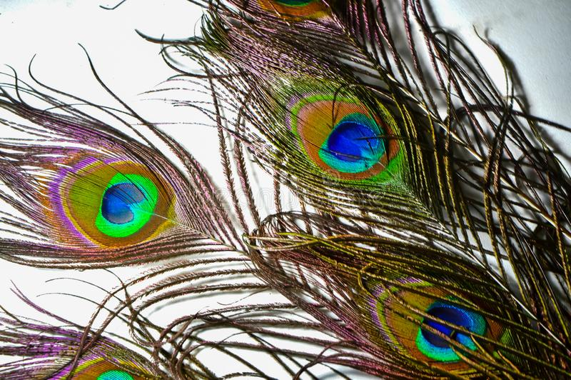 Peacock feather,peacocks tail ,birds tail  ,peacocks feathers on isolated white,wallpaper. Close-up, eye, color, plumage, blue, fowl, decor, pattern, animal stock photo