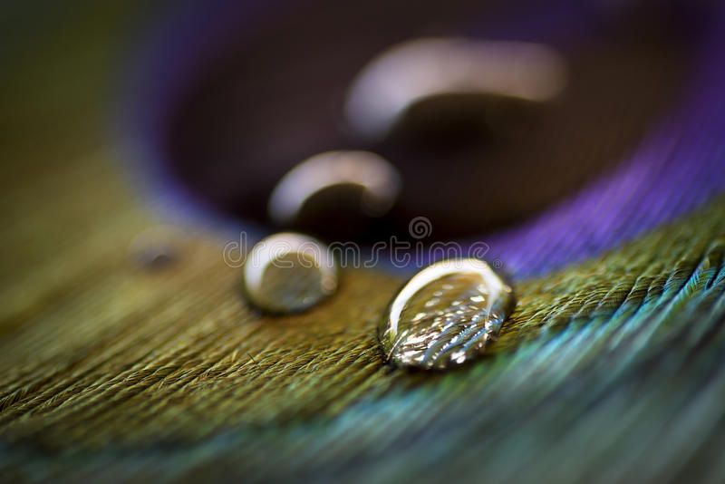 Peacock feather with water drops. royalty free stock photos