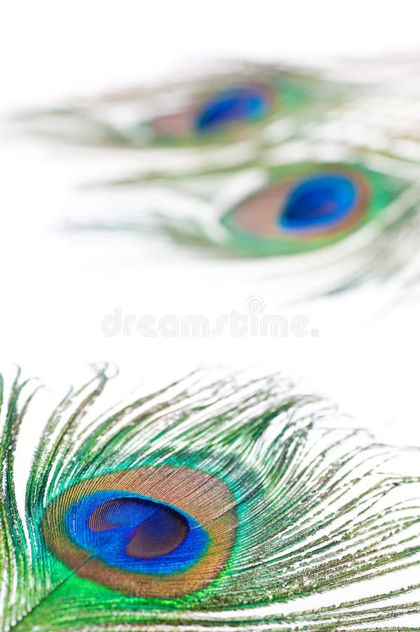 Peacock feather on white stock images
