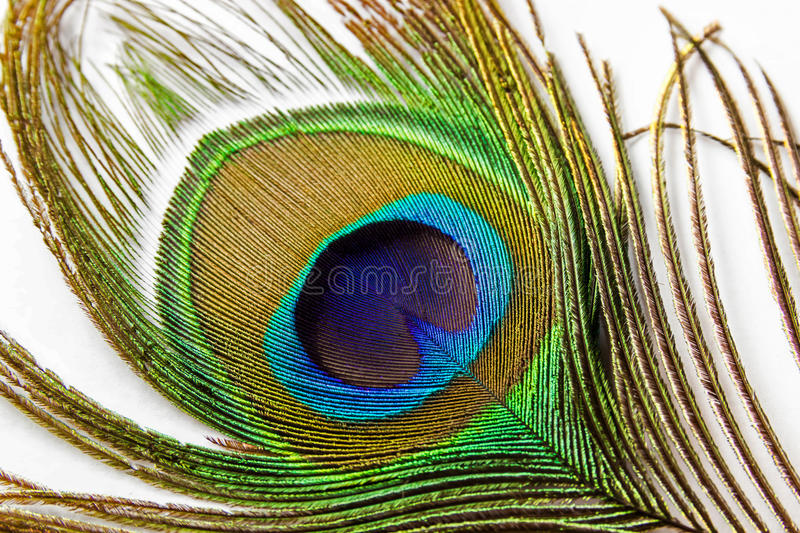Peacock feather, on white background isolated stock photo