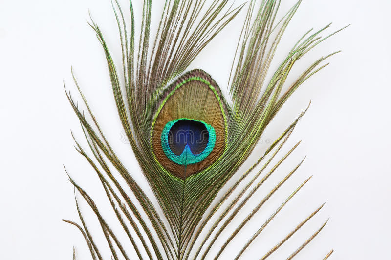 Peacock feather on white background stock images