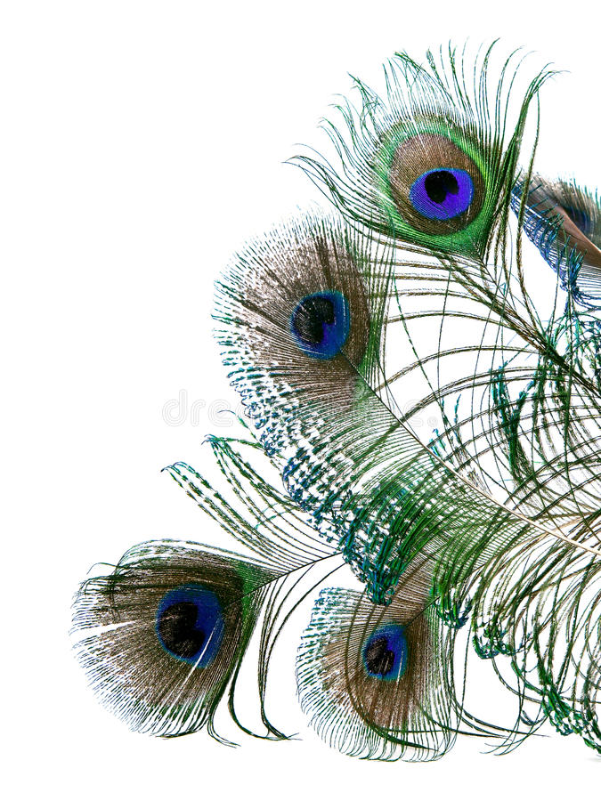 Free Peacock Feathers Stock Image - 13928671