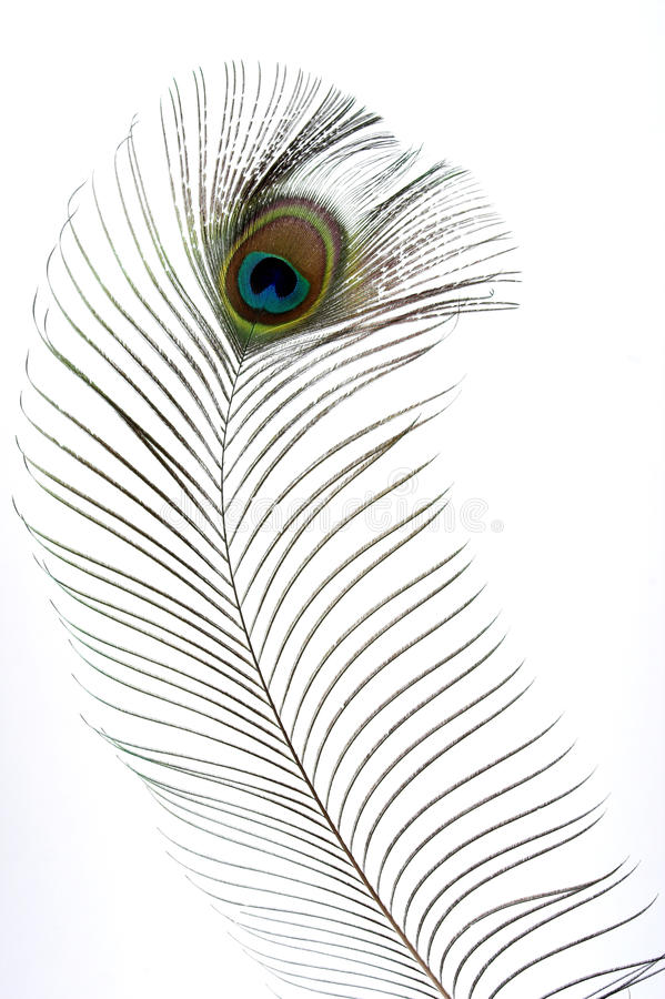 Download Peacock feathers stock photo. Image of colorful, detail - 15534710