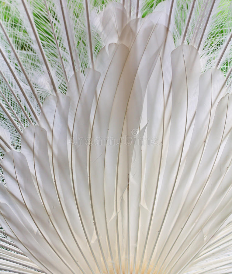 Download Peacock Feathers Background Stock Photo - Image: 38266492