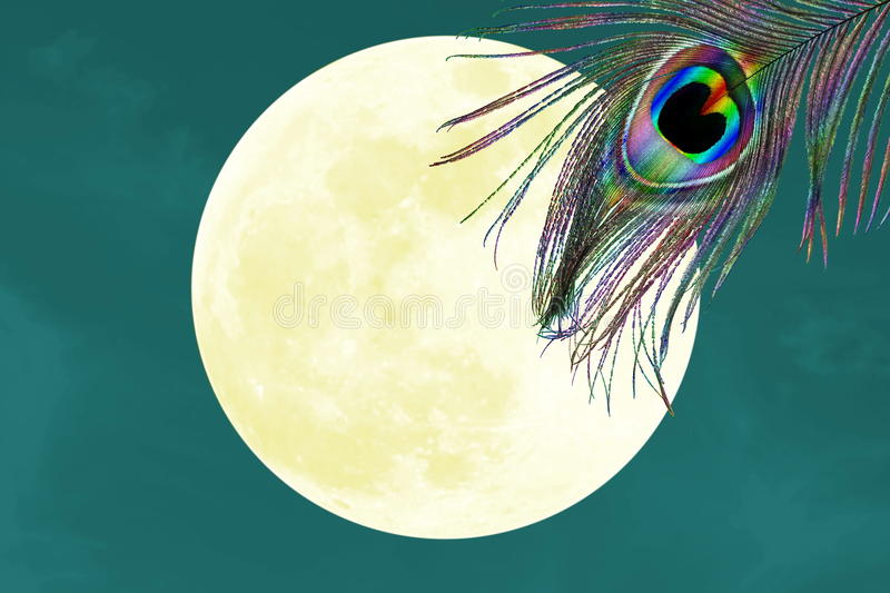 Peacock feathers in moon background with text copy space stock illustration