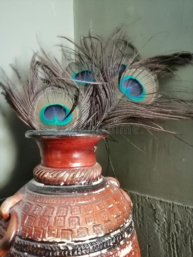 Peacock feathers placed in an old pot. stock images