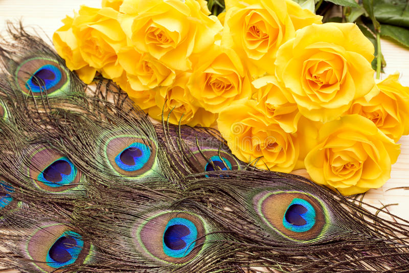 Peacock feathers and roses stock photo
