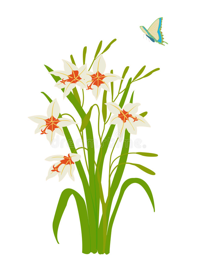 Peacock orchid with butterfly royalty free illustration