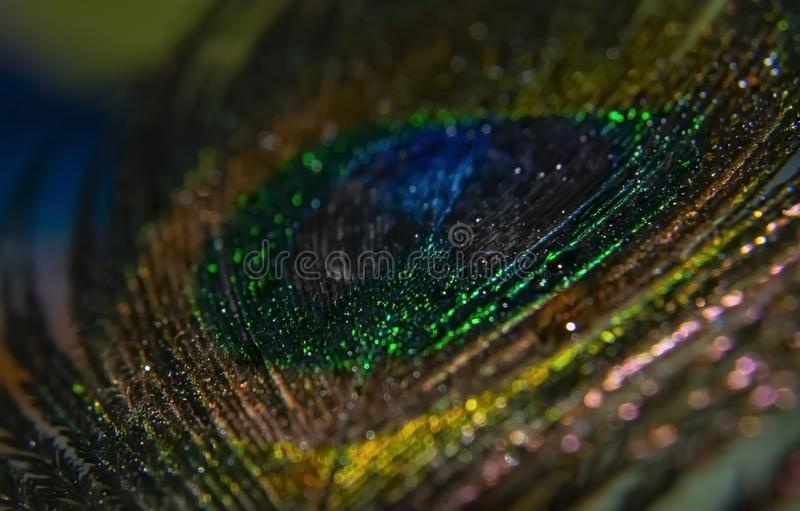 Peacock Peafowl Colorful Shining Feather Abstract Macro stock foto's