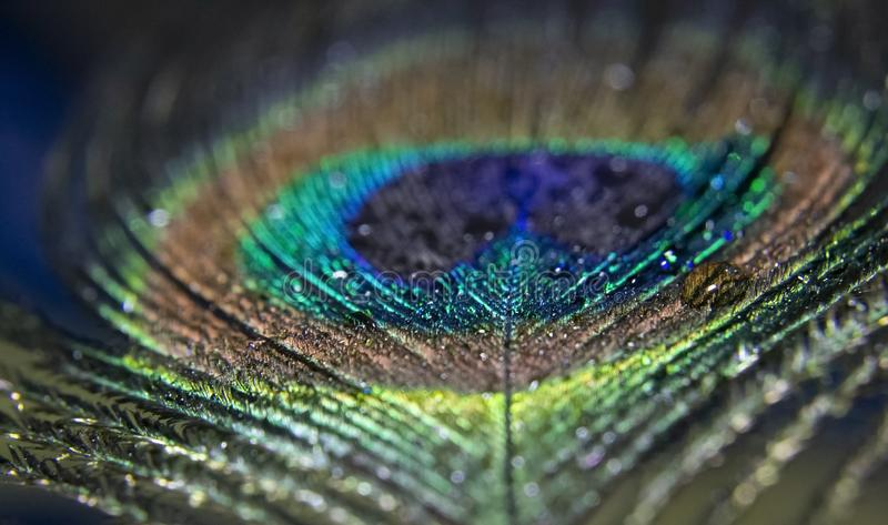 Peacock Peafowl Colorful Shining Feather Abstract Macro royalty-vrije stock afbeeldingen