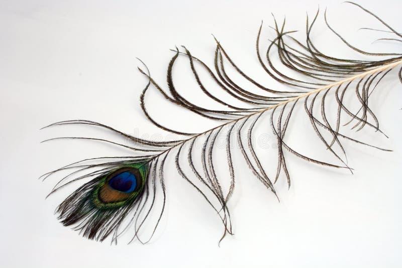 Peacock plume. Single peacock plume on white background royalty free stock photos