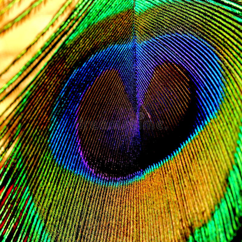 Peacock& x27; textura de la pluma de s imagenes de archivo