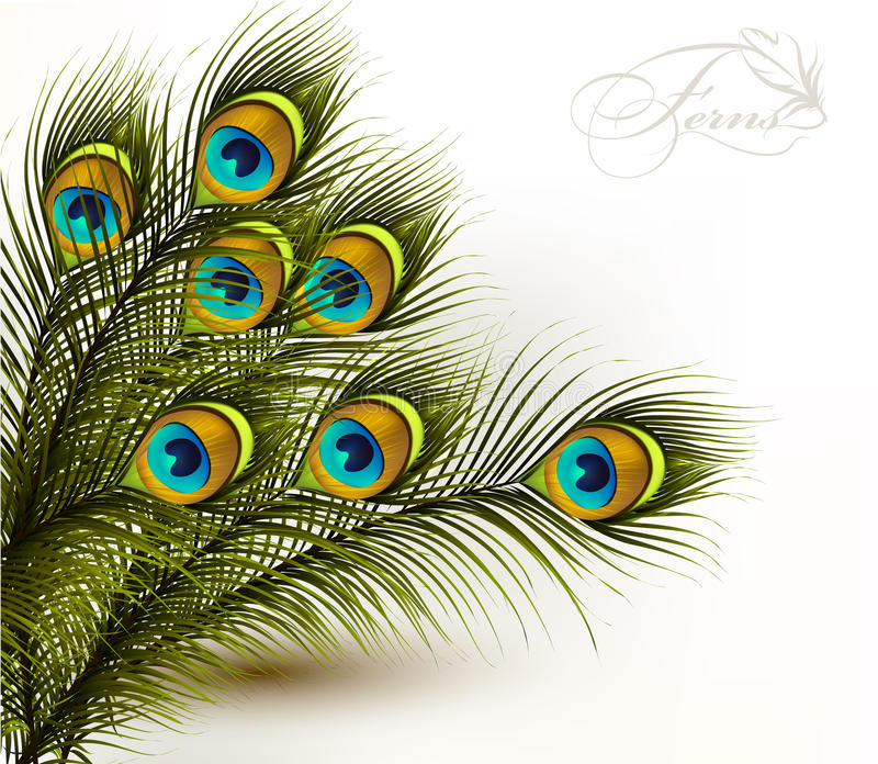 Peacock vector colorful ferns on a white background royalty free illustration