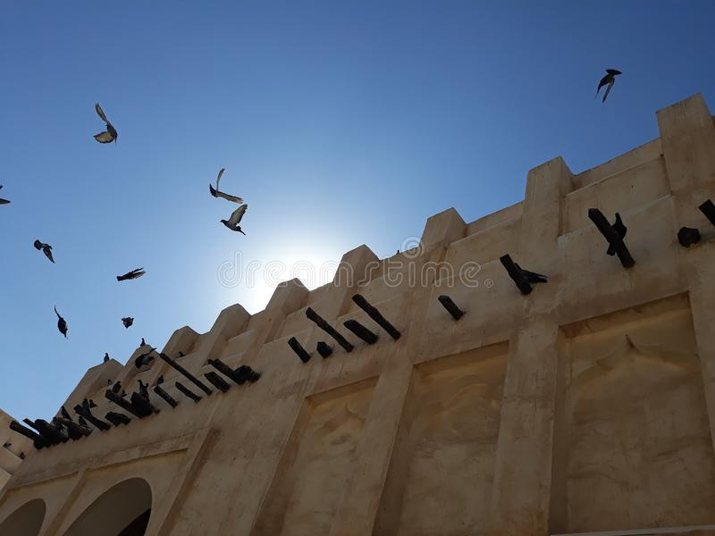 Peageon fliegen lizenzfreies stockfoto
