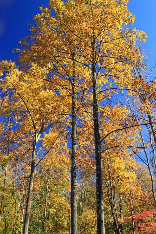 Peak Color (4) Free Public Domain Cc0 Image