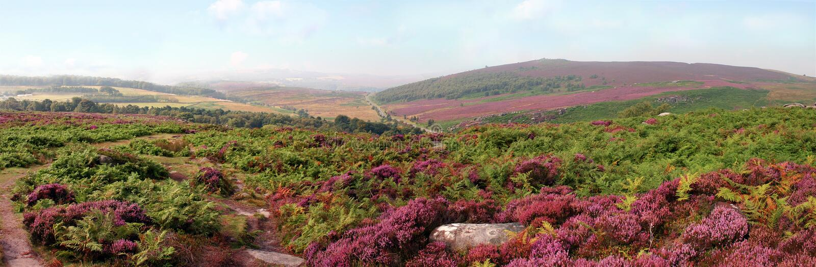 Peak District Heather, Derbyshire royalty free stock images