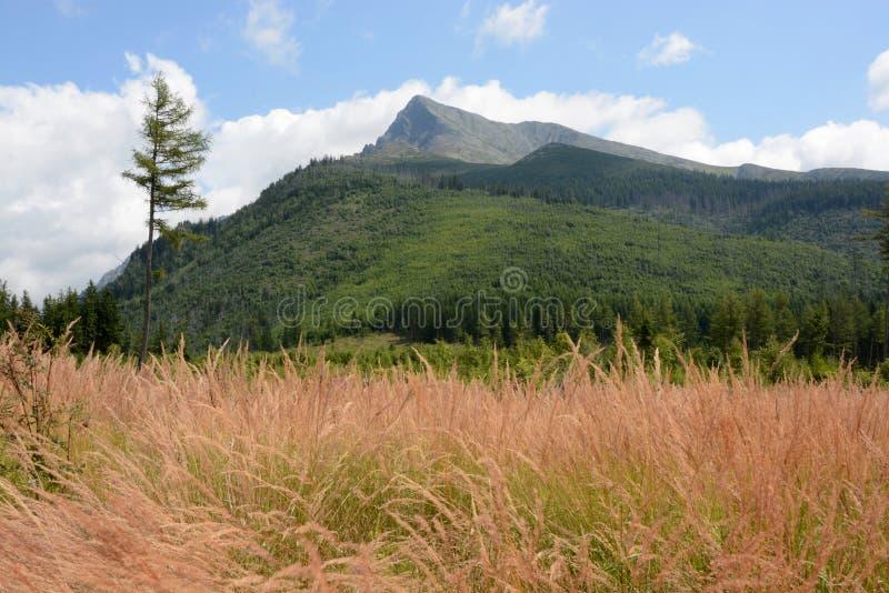 Slovensko, High Tatras, Krivan peak stock photography